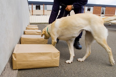 訓練中の警察犬