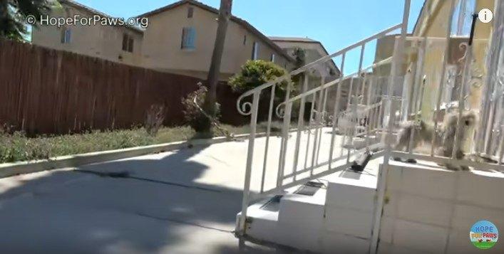 玄関前の階段の上にいる犬