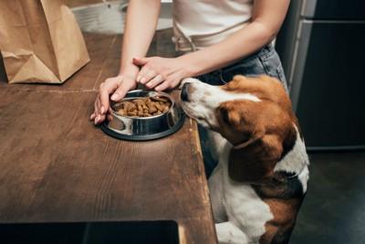 用意するご飯を狙う犬