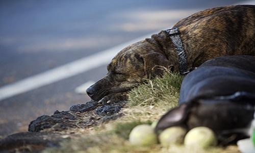 伏せて寝ている犬 道路わき 草