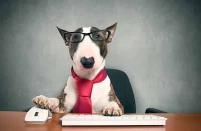 パソコンを触る犬