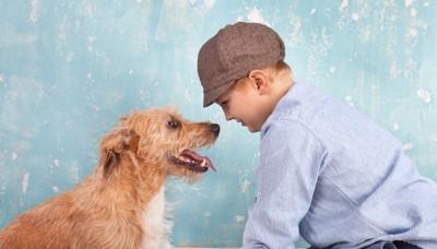 犬と男の子仲良し