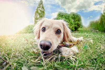 犬の顔のアップ