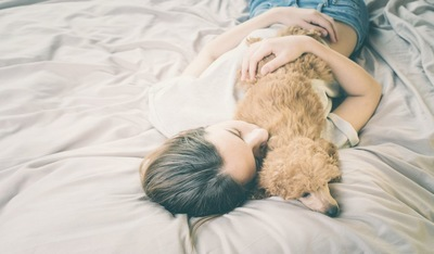 飼い主と一緒にベッドで眠るトイプードル