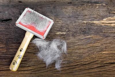 スリッカーブラシと抜け毛