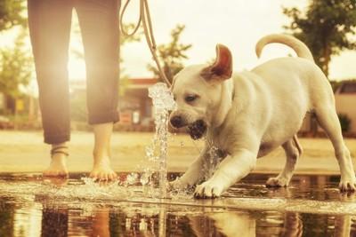水におどろく子犬