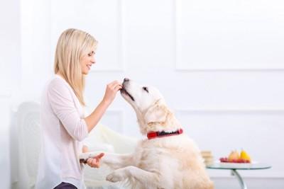 犬にご飯をあげる人