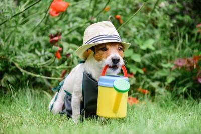 農夫の格好をしている犬