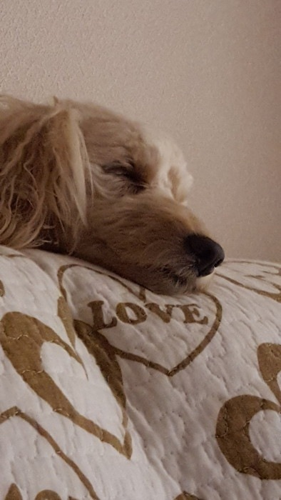 愛犬の寝顔写真11枚目