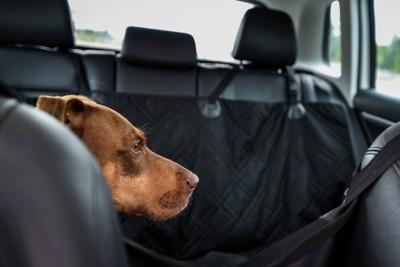 車内で静かな犬