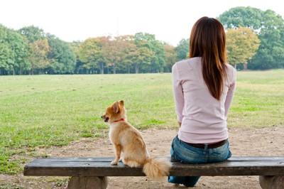 ベンチで休む人と犬の後ろ姿