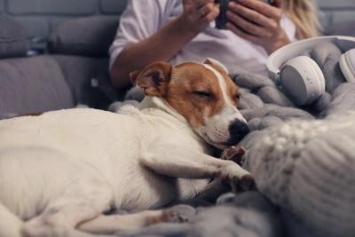女性に寄り掛かって寝ている犬