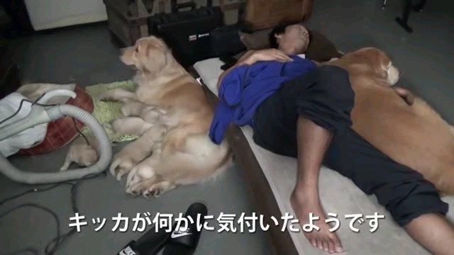 キッカが~字幕