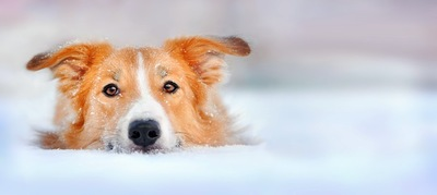 雪の中で寝そべる犬