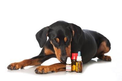 薬品のニオイをかぐ犬
