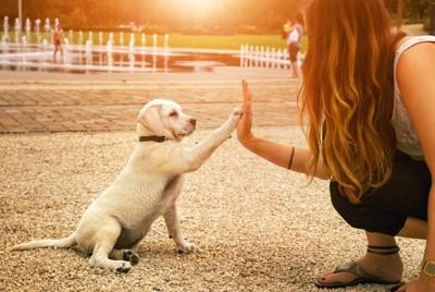 女性とハイタッチする白い子犬