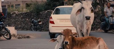 路上の動物たち