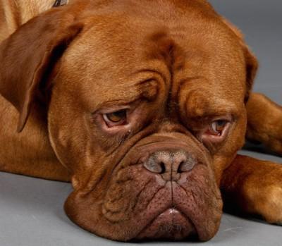 ストレスを感じて元気のない犬