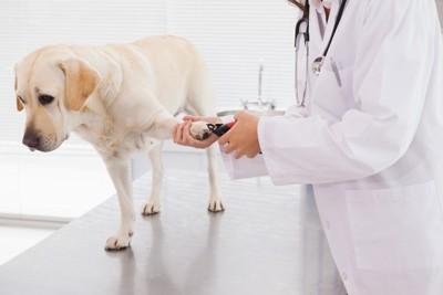 獣医で爪切り