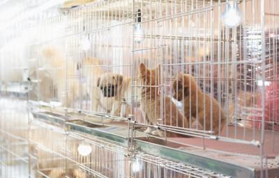 ペットショップの生体展示