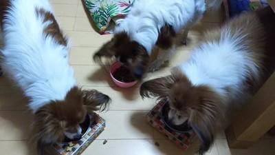 3匹でご飯