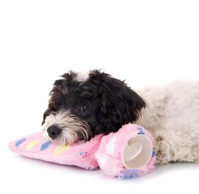 湯たんぽのあごを乗せる犬
