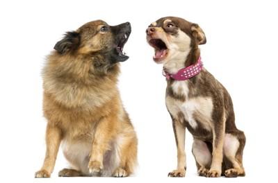 2匹の犬が吠えている