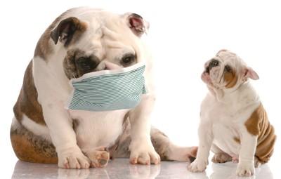 マスクをしている犬