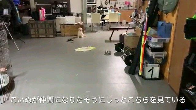 こいぬが~字幕