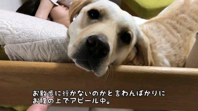 お散歩に~字幕