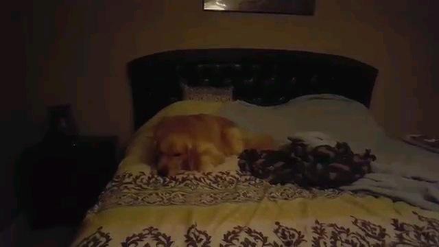 毛布と寝る犬