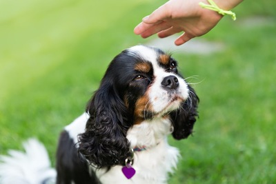 見上げる犬と撫でようとする人の手