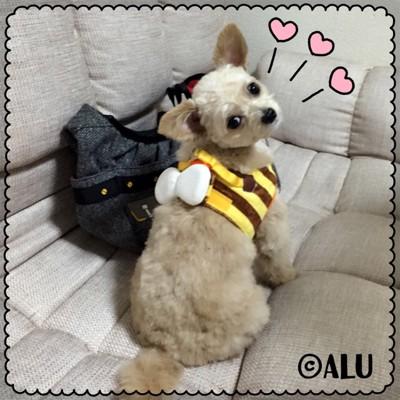 #ミツバチのハーネスを着た犬#