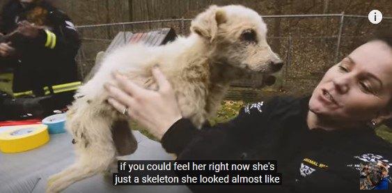 犬を立たせる