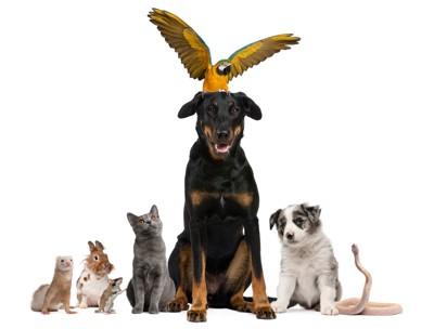 犬と動物)