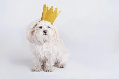 王冠をかぶった犬