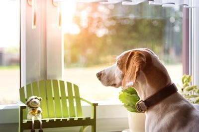 窓から外を見る首輪をつけた犬