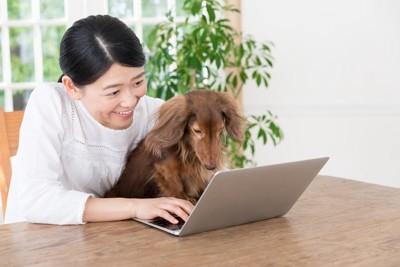 パソコンを触る女性とミニチュアダックスフンド