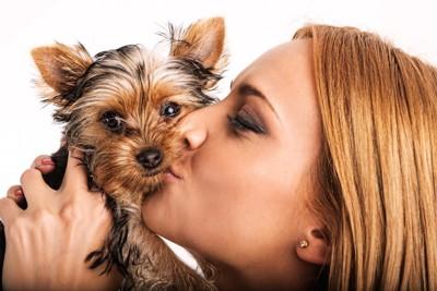 ヨークシャテリアにキスをする女性