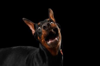 ビックリな表情の犬