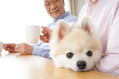 老夫婦に可愛がられている犬