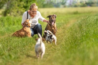 草むらにしゃがむ女性と犬4匹