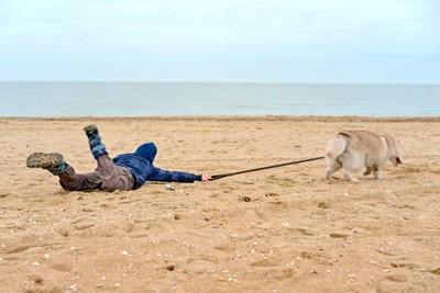 犬に引っ張られて転んだ人