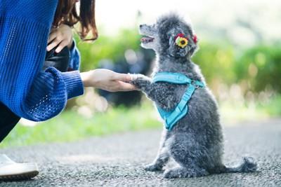 トレーニングする犬と女性