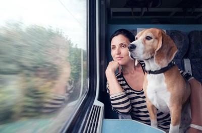 列車の座席から窓の外を見る女性とビーグル犬