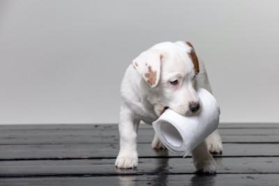 トイレットペーパーを咥えて歩く子犬