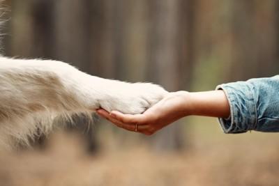 重ねられた犬と人間の手