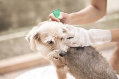 薬を塗る犬