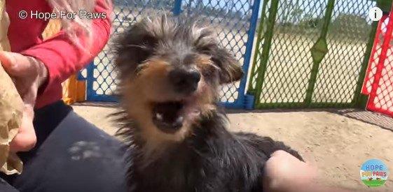 満足気な表情の犬