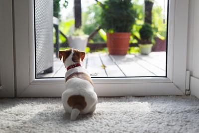 外を見つめる犬の後ろ姿